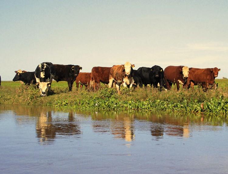 Los humedales, con producción sostenible