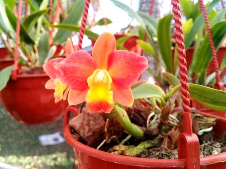 Misiones registró una nueva orquídea