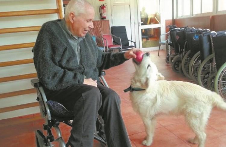 """Las mascotas """"generan beneficios y un gran valor terapéutico en las personas"""""""
