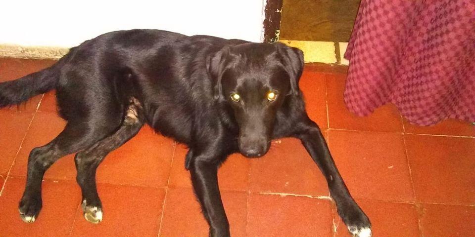 Resultado de imagen para Mario Bross, el perro misionero que llegó hasta Adrogué