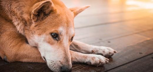OMS- La Organización Mundial de Salud precisó que se deben ser cautos con el manejo de animales